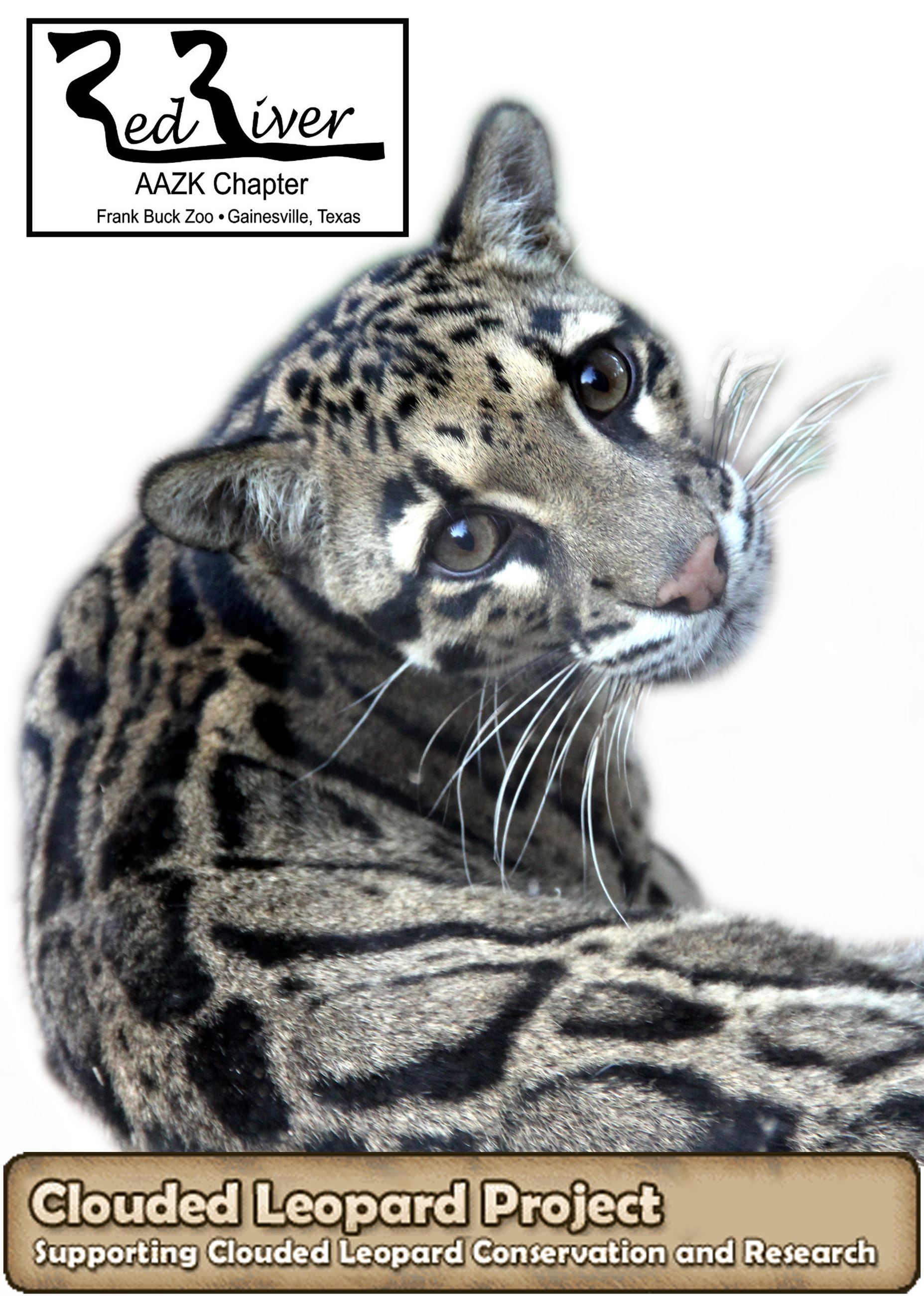 Clouded Leopard Project